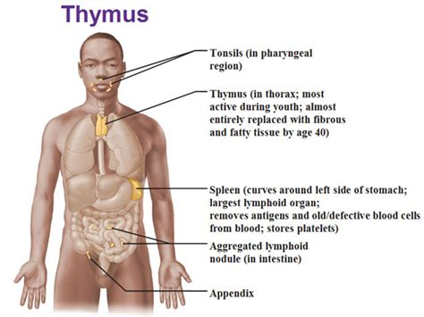 what does it means when the thyroid gland picture 3