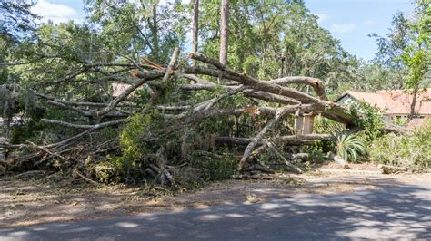 debris removal dauphin county picture 2