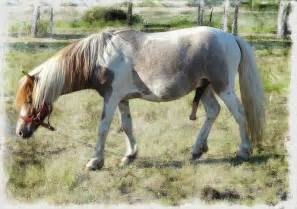 erection stallion picture 6