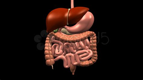 gall bladder disorders picture 14