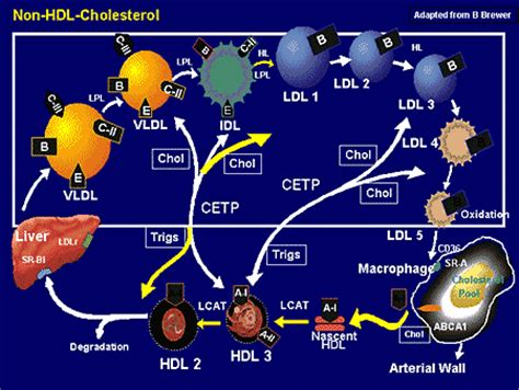 Nonhdl cholesterol picture 9