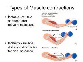 the contractile mechanism however, does not have a picture 1