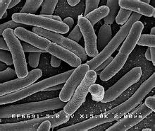 will probiotics show on a drug test picture 5