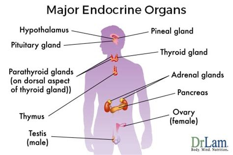 where is the thyroid gland located picture 6