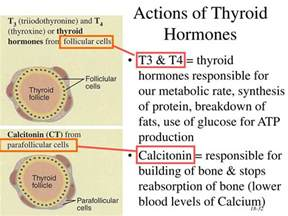 adding back thyroid hormone picture 5