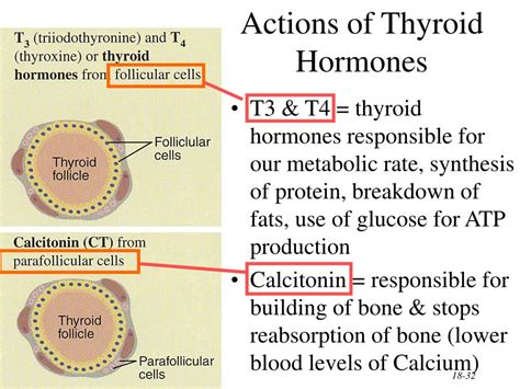 super high thyroid hormone picture 6