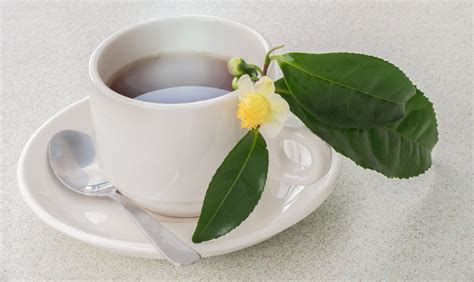 caetchins white tea picture 1