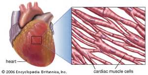 is thickening of your heart muscle deadly picture 9
