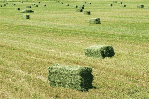 alfalfa bale prices picture 15