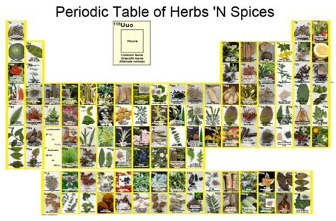 herbs that help your appetite picture 2