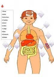 digestive vocabulary match picture 5
