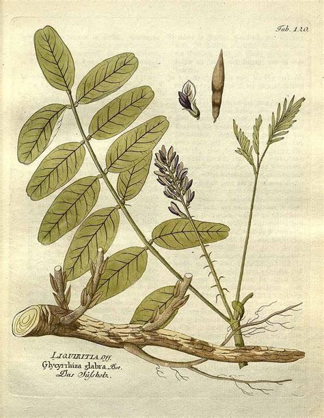 what is the best natural herb that causes picture 5