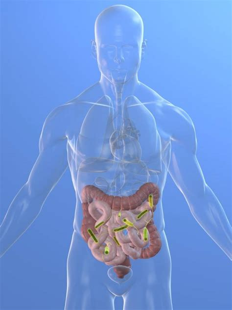 clean out bacteria intestinal tract picture 6