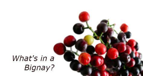 bignay tea benefit picture 9