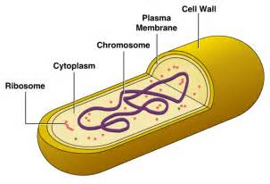 Bacterial cell image picture 7