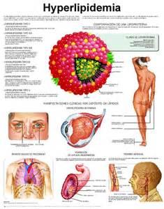Hypercholesterolemia nutrients picture 3