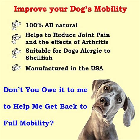 all natural joint pain relief for dogs picture 9