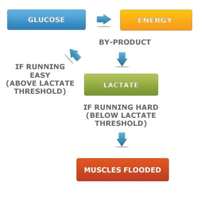 lactic acid yeast for fat loss picture 8