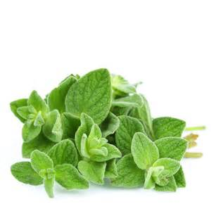 oregano essential oil for sebaceous cyst picture 6