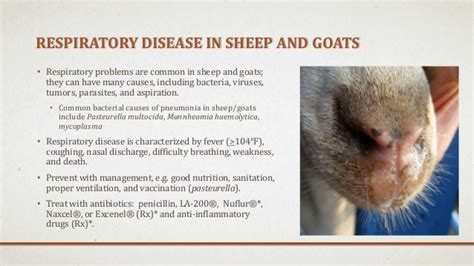 health problems of goats picture 6