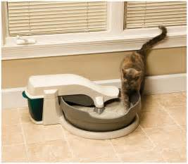 feline h cleaning picture 2
