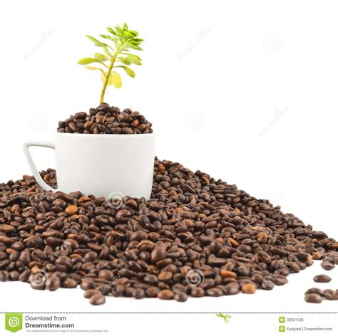 green coffee beans for raising glutathione picture 10