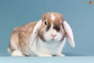 can you treat rabbits eyes with people products? picture 4