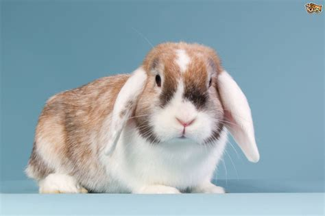 can you treat rabbits eyes with people products? picture 5