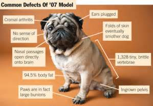dogs skin disorders picture 9