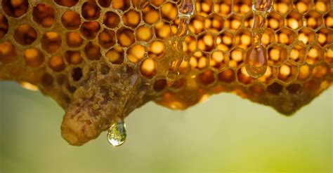 honey comb for your colon picture 3