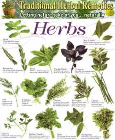 list of herbal plant in abortion picture 15