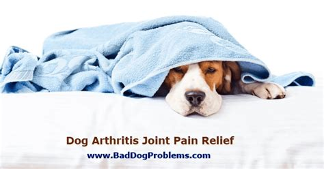 canine pain relief treatments picture 6