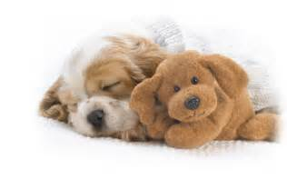 can dogs take nighttime sleep aid picture 1