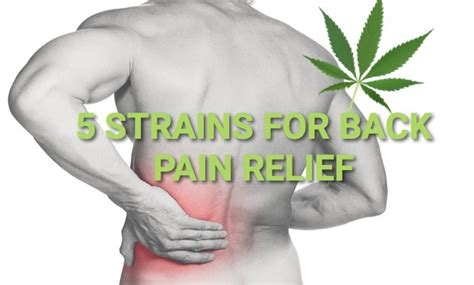 cannabis pain relief picture 2