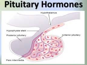 hgh hormone picture 6