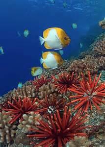 sea urchin for libido picture 6