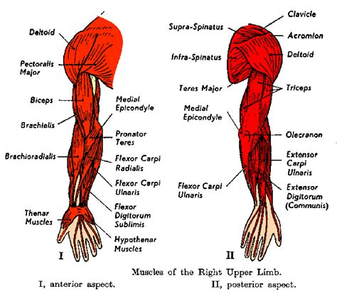driver muscle pain picture 17
