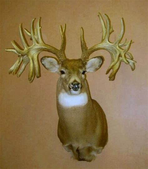 world's largest deer antlers picture 9