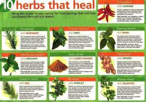 examples of herbal medicine picture 7