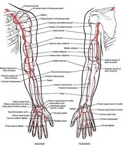 poor blood circulation  upper extremity  forearm picture 1