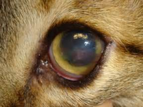 cat herpes picture 13