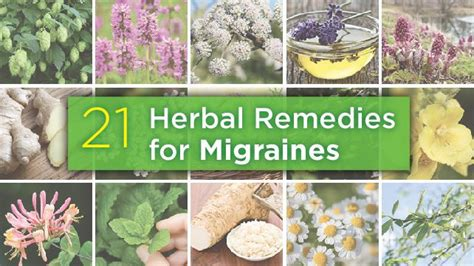 herbal remedy for migraines w nauseau picture 7