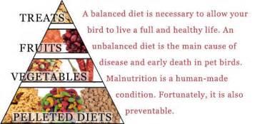 bird diet picture 14