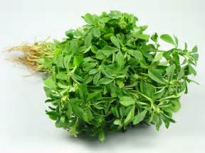 fenugreek is women boobes increse in hindi picture 5