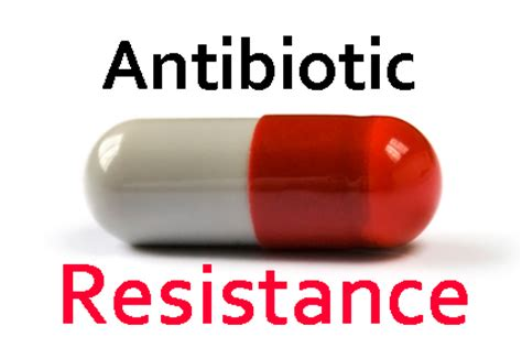 can anti biotic can cure pigsa picture 6
