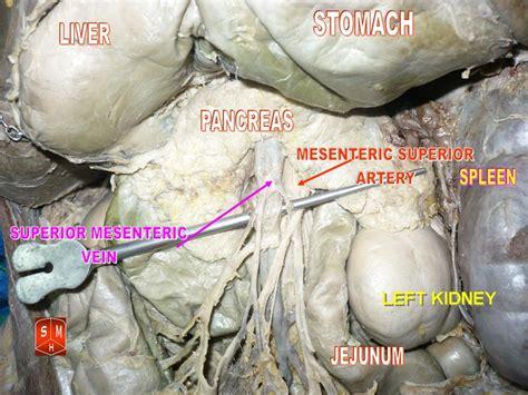 adrenal gland picture 9