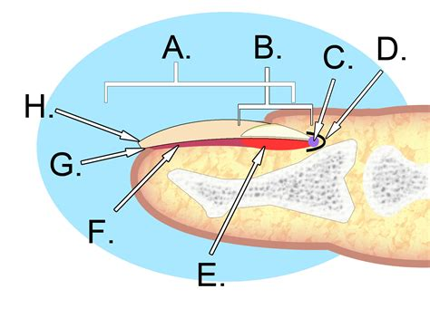 split skin on big toe picture 18