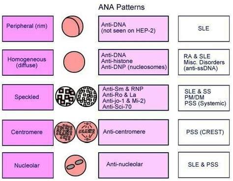 ana and autoimmune thyroid disease picture 1