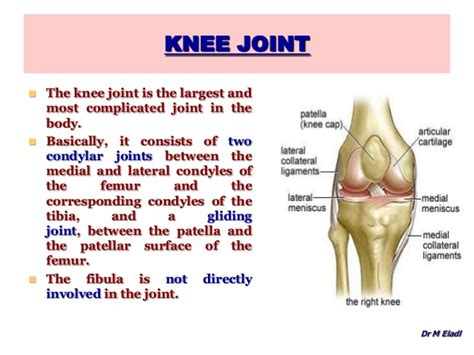 anotomy of knee joint picture 13