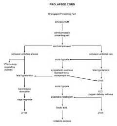 prolapsed hemorrhoid picture 7